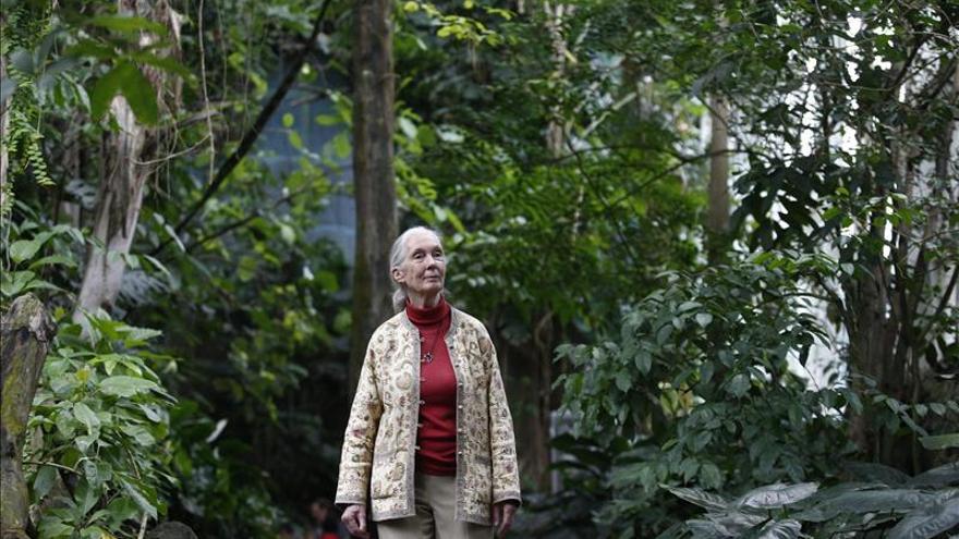 La primatóloga Jane Goodall obtiene el Premio Catalunya