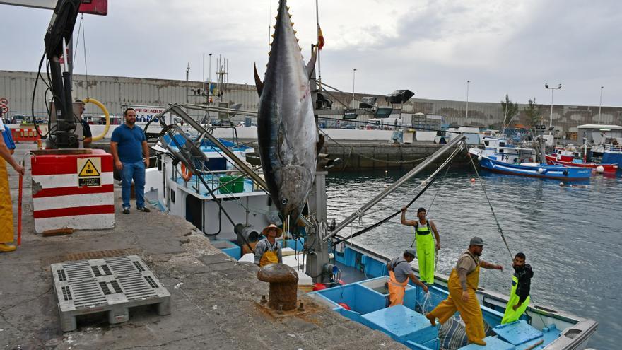 Desembarco de atún rojo en el Puerto de Arguineguín
