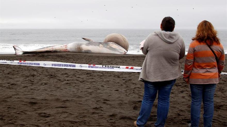 Una ballena varada con una gran protuberancia causa expectación en costas de Chile