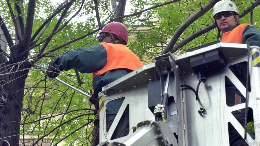 Operarios municipales podan un árbol   AYUNTAMIENTO DE MADRID