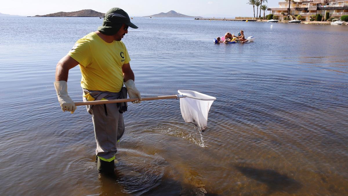 Operarios retiran del mar los peces muertos que han aparecido en las playas del Mar Menor en Murcia. EFE/Juan Carlos Caval/ Archivo