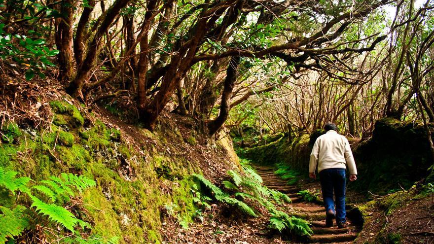 Inicio del sendero de Las Vueltas de Taganana, uno de los caminos más espectaculares de Anaga.