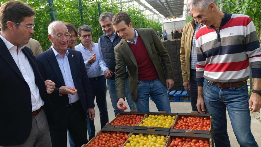 Pablo Casado, este martes, en el invernadero de tomate cherry de Mujiverde, en El Ejido (Almería).