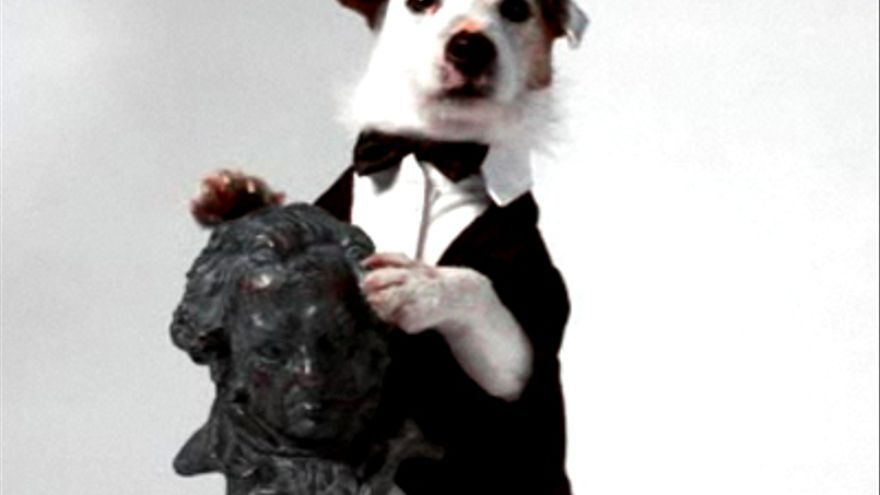 Pancho, el famoso perro de la Lotería y 'Aquí no hay quien viva', salta al cine