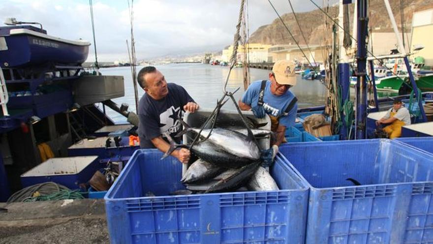 Descarga de túnidos en la dársena pesquera de Santa Cruz