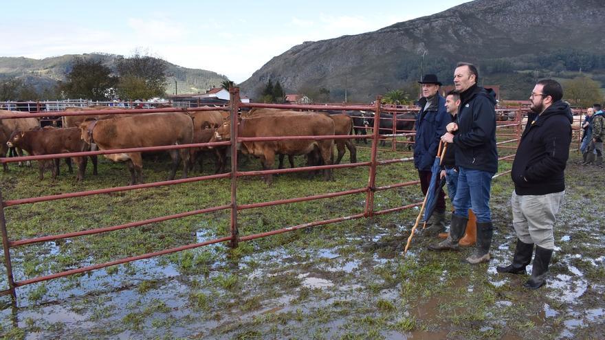 El Gobierno concede más de 2,3 millones en ayudas para el bienestar animal a 1.087 ganaderos