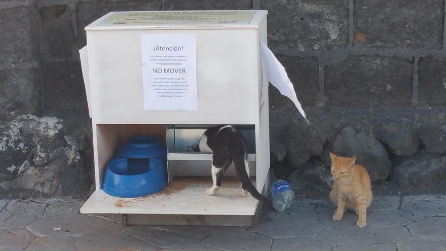 En la imagen, el comedero de gatos instalado en Los Cancajos. Foto: LUZ RODRÍGUEZ.