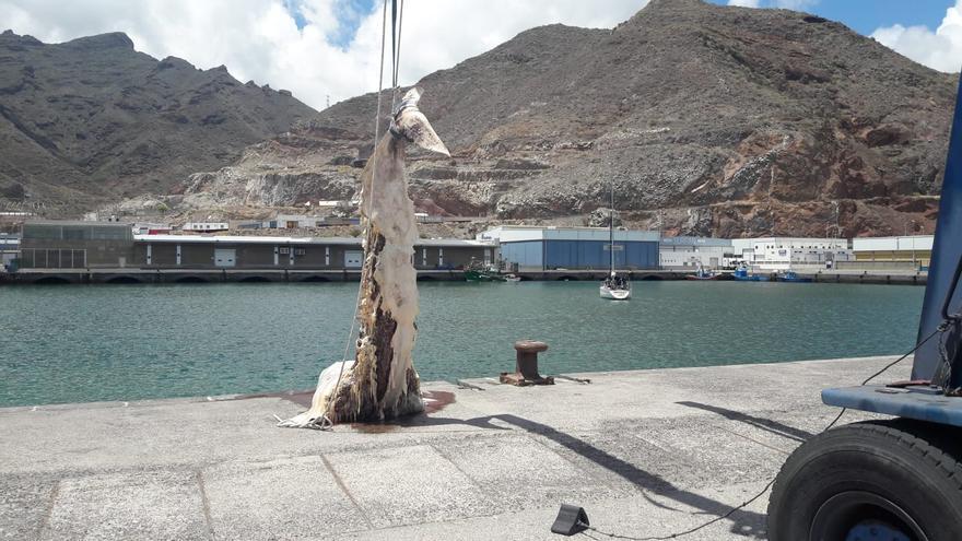 Salvamento Marítimo remolca el cadáver de la ballena hallada muerta en la escollera de Las Teresitas.
