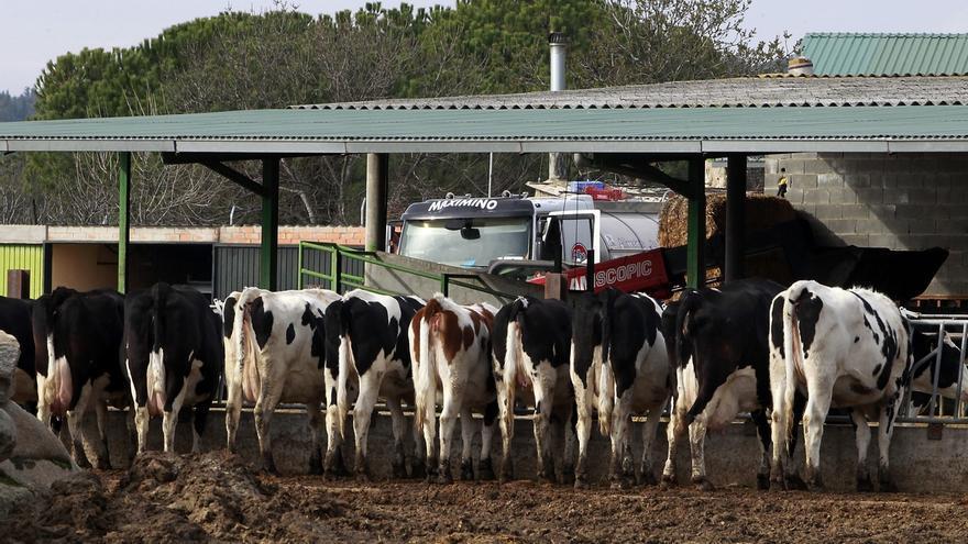 Medio Rural pagará la próxima semana 6,7 millones de ayudas de la PAC a 3.717 ganaderos y agricultores cántabros