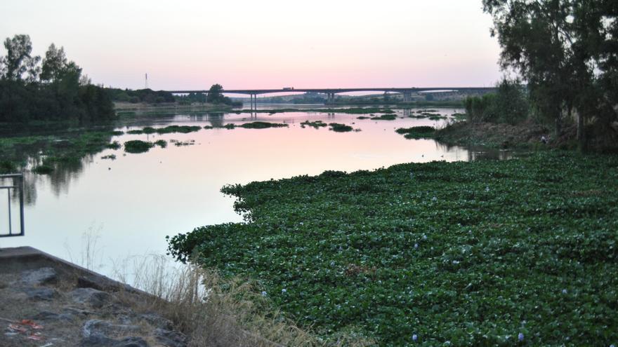 Aspecto actual del Guadiana a su paso por Mérida / JCD