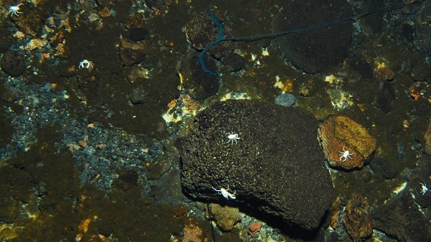 Los jameítos y el anélido Bonellia en el fondo de la laguna de los Jameos del Agua.