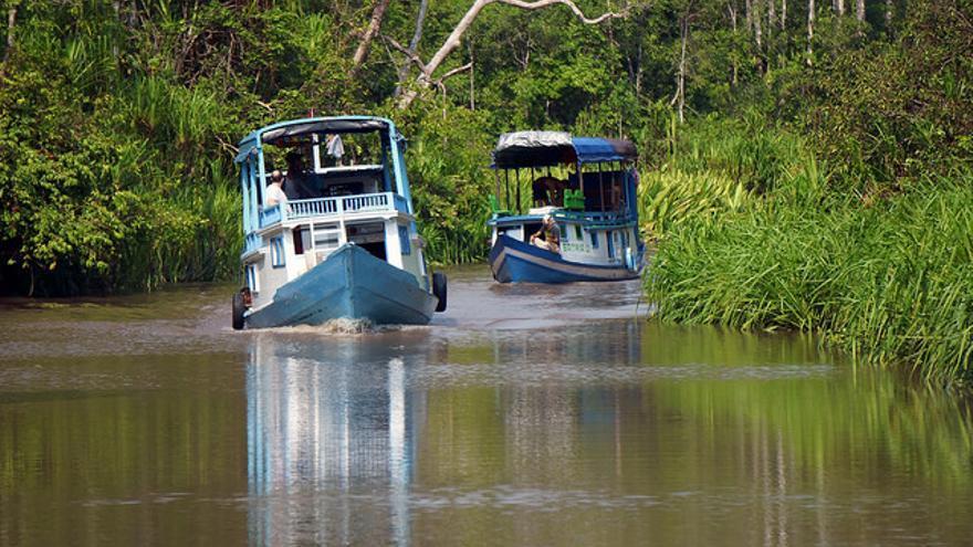 'Kotlok' internándose en el Parque Nacional de Tanjung Puting. Budi Nusyirwan