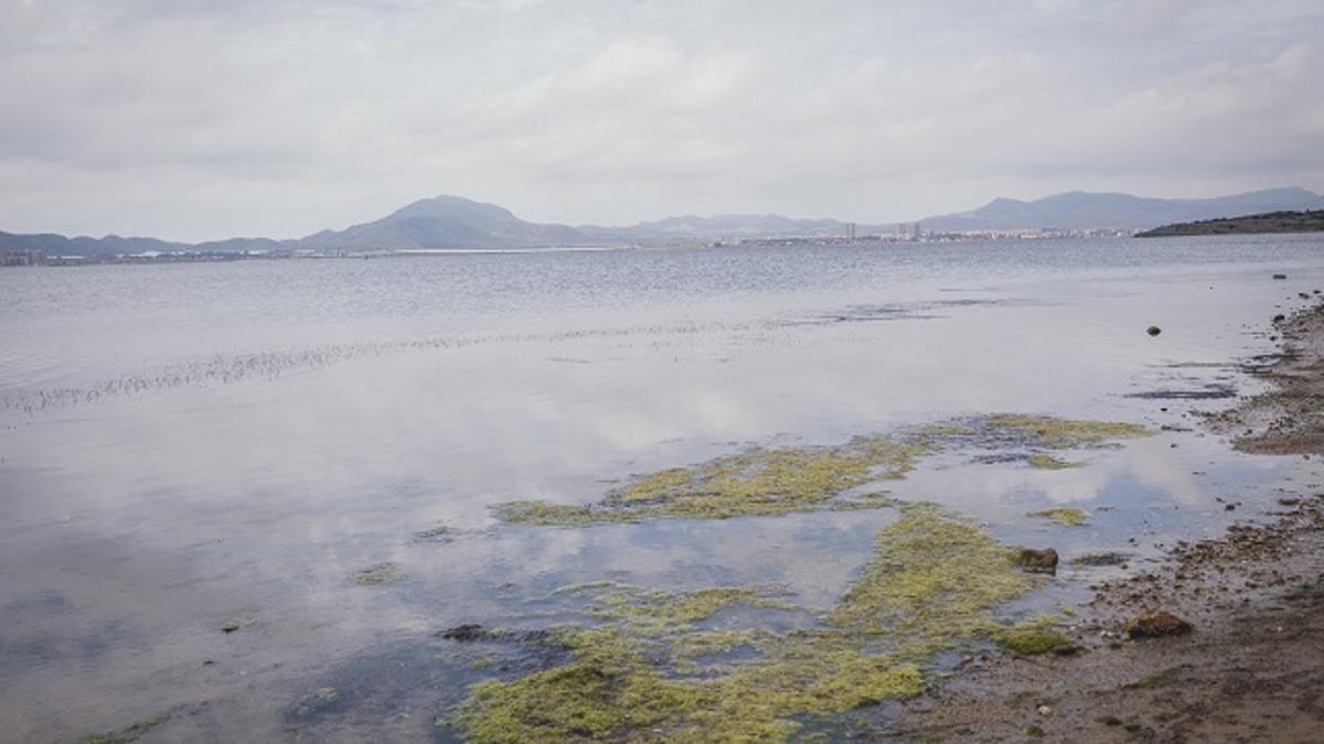 """Asociaciones ecologistas temen que se descuide """"aún más"""" el estado del Mar Menor por el confinamiento"""