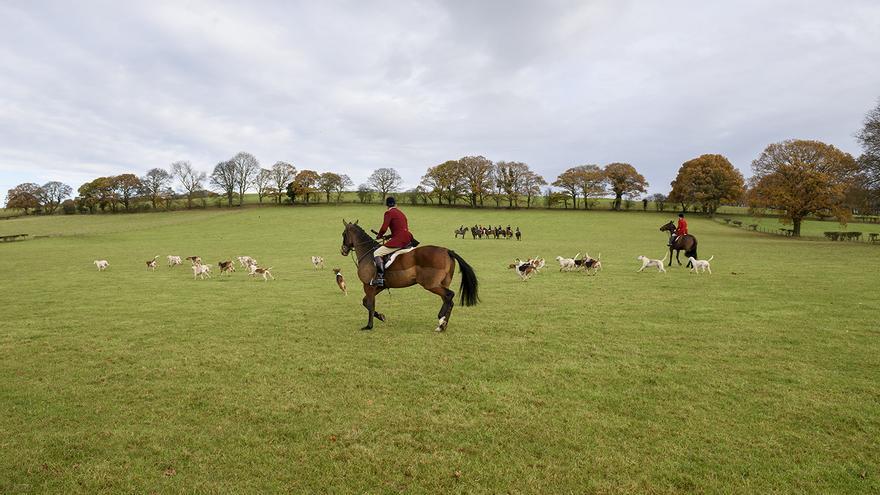 La caza tradicional con perros es ilegal en Reino Unido desde el año 2004 pero se sigue llevando a cabo con total impunidad. Foto: Tras los Muros
