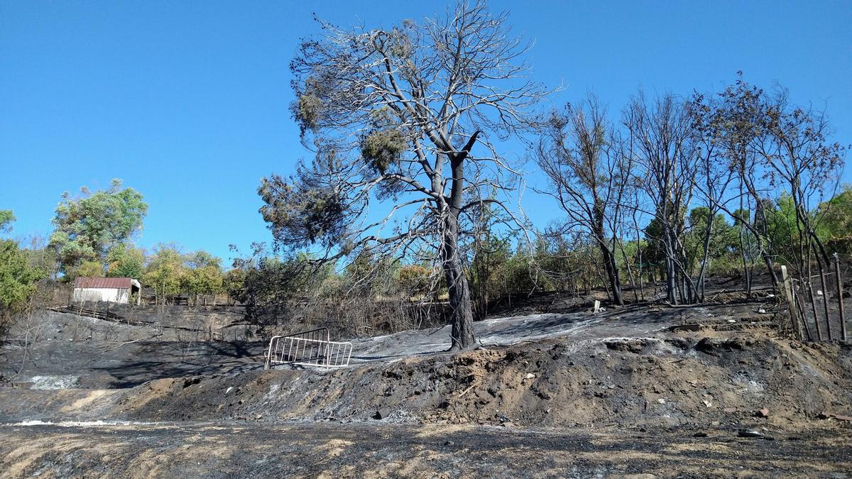 Zona quemada en la Dehesa de la Villa donde pudo iniciarse el fuego