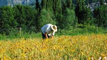 Proponen a Agricultura que destine fondos del PDR para los agricultores como ha posibilitado el Consejo Europeo