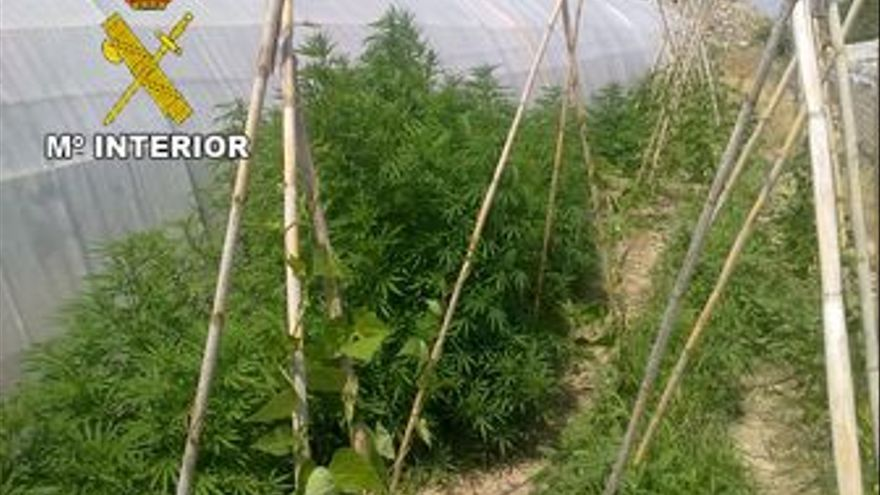 Platación de marihuana en Murcia