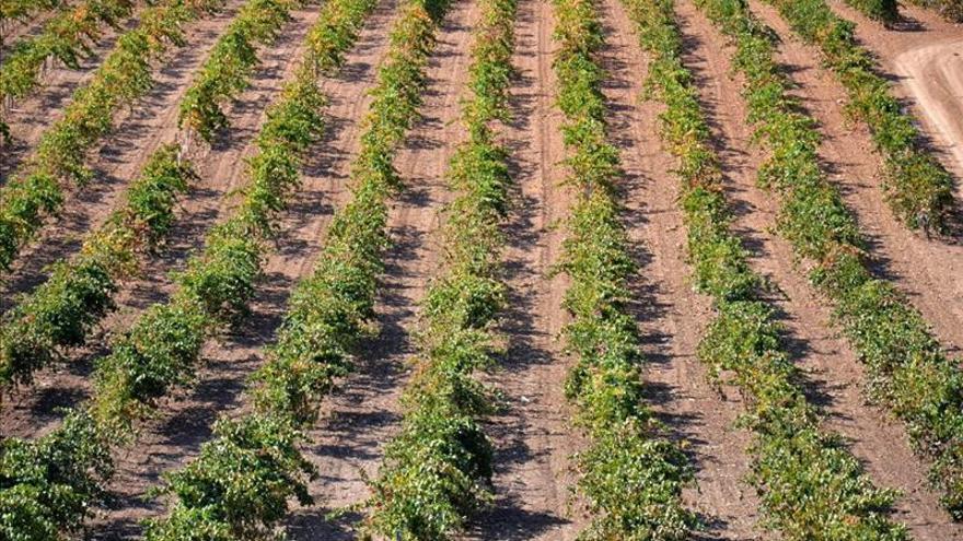 Viñedos capaces de capturar carbono y de producir sus propios fertilizantes