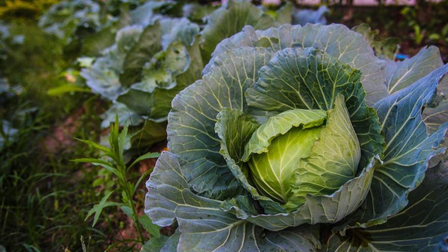 Hortalizas sin químicos y recién cosechadas