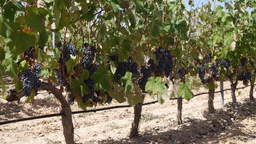 Junta aprueba ayudas por valor de 76 millones para agricultura ecológica, 44 de ellos para jóvenes agricultores