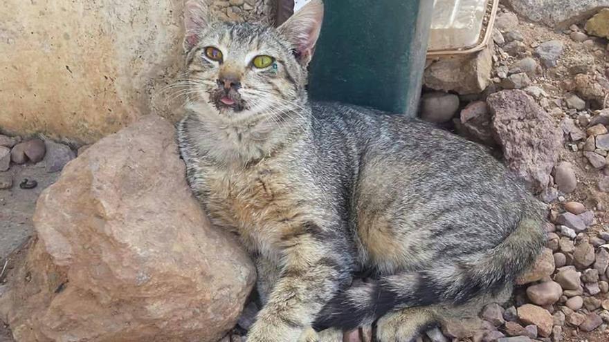 Uno de los gatos con síntomas de envenenamiento en una imagen distribuida por el Arca de Noé.