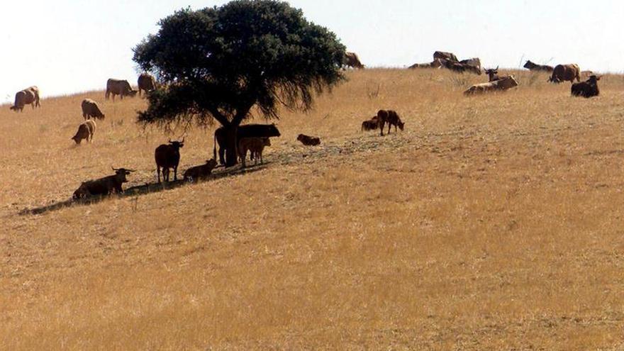 Portugal lanza un paquete de medidas para combatir la peor sequía desde 1995