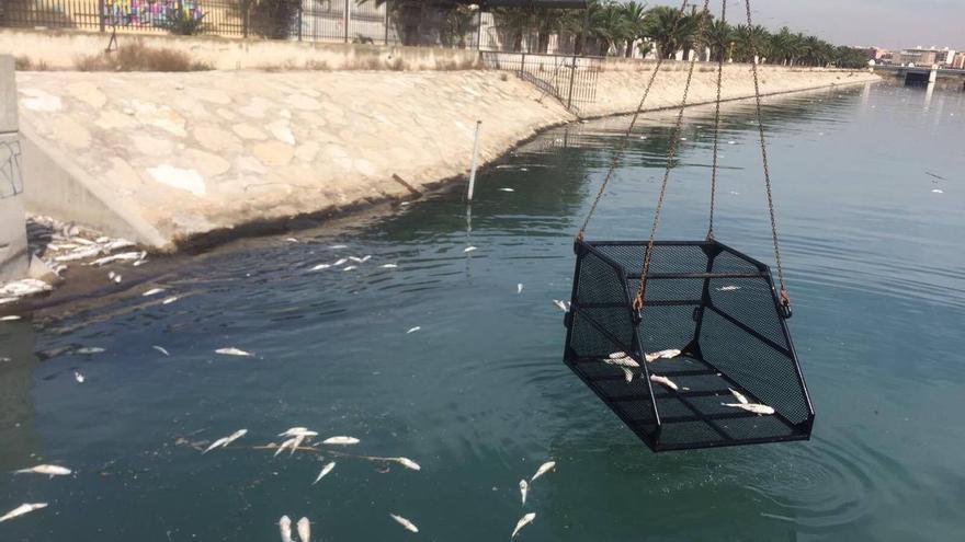 Labores de limpieza de los peces muertos