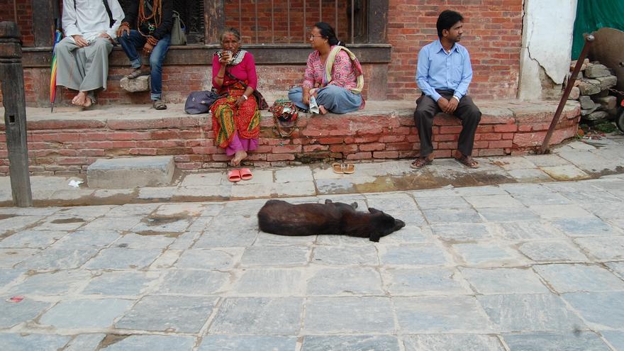 Perros callejeros en Kathmandú