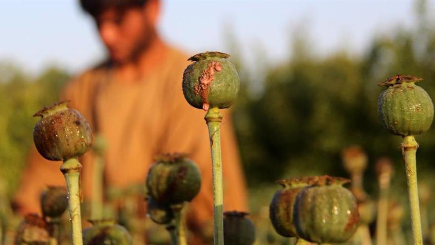 La ONU alerta de que Afganistán sigue batiendo récords de producción de opio