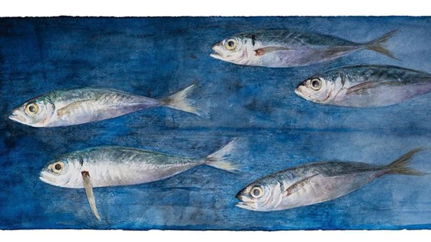 Resultado de imagen de exposición peces pedro cano