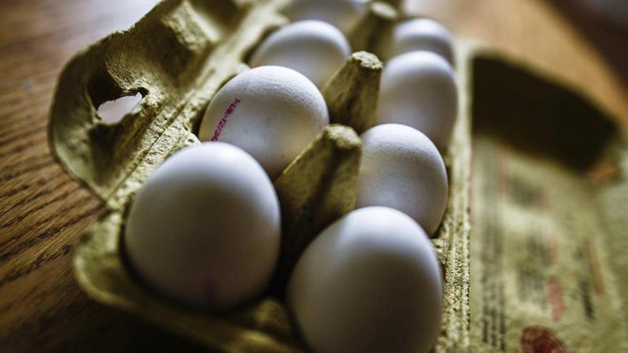 Sanidad asegura que no se han distribuido huevos contaminados en España
