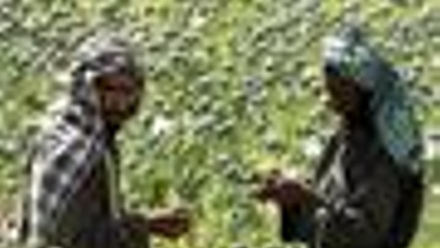 Opio en Afganitán