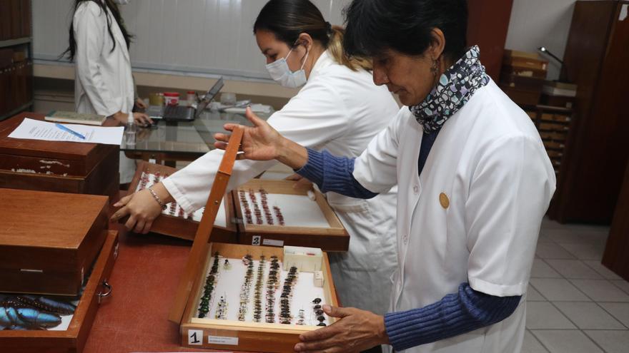 Julieta Ledezma, guardiana y madrina de una decena de insectos en Bolivia