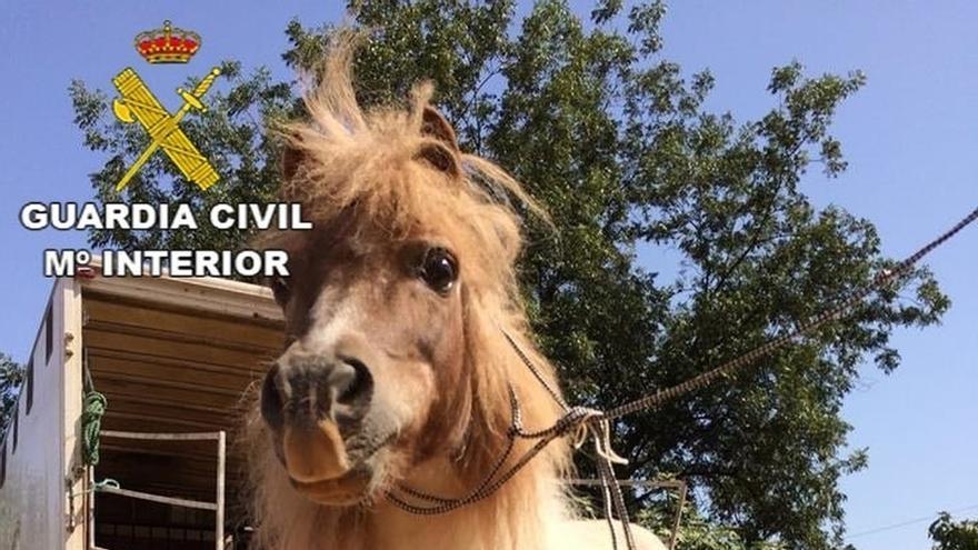 Detalle de los cascos del pony rescatado por la Guardia Civil