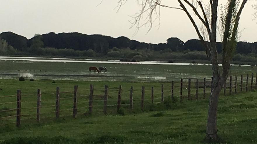 Doñana.