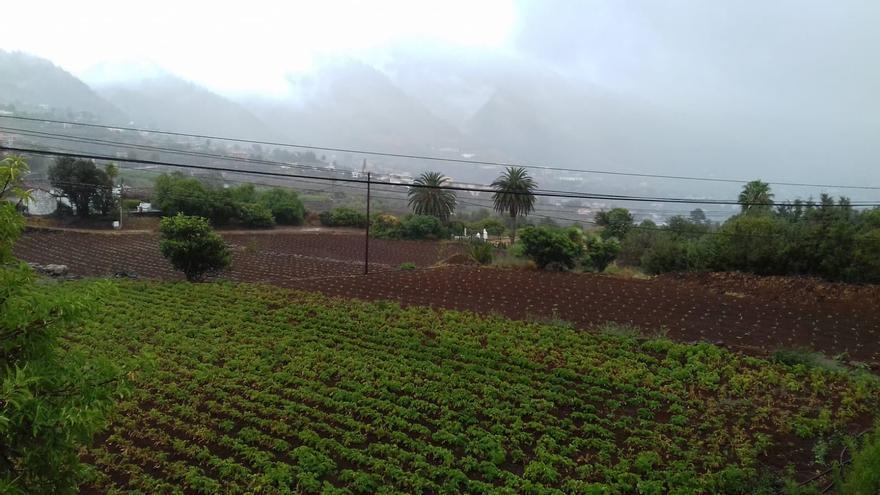 La lluvia está regando este sábado los campos de la comarca este (en la imagen) de La Palma.