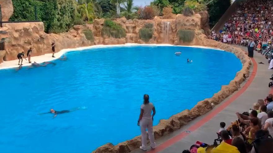 Imagen con las tres personas que protestaron dentro de la piscina, con los delfines y los cuidadores a un lado