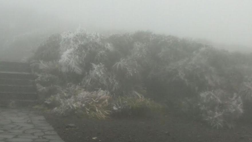 En la imagen, plantas cubiertas de escarcha,  en el exterior de la Residencia del IAC en El Roque de Los Muchachos, este viernes.