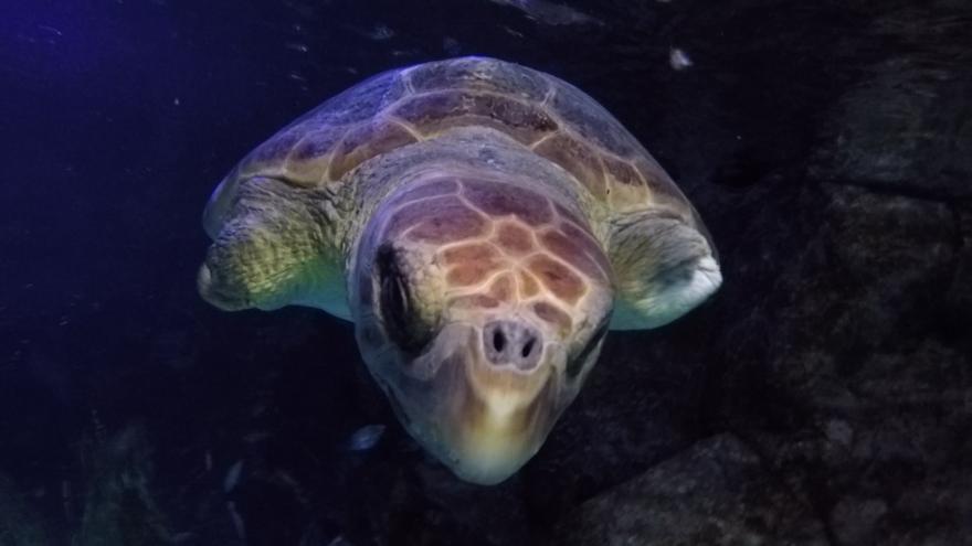 La tortuga, con sus lesiones a la vista