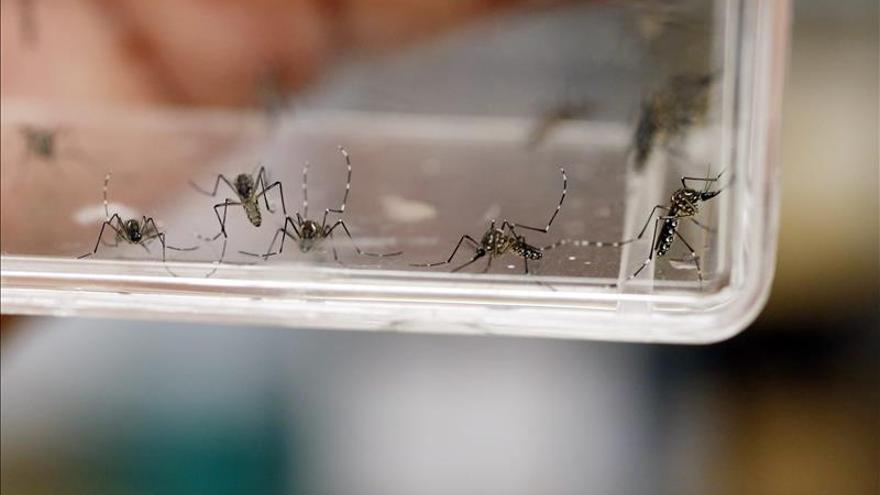 El clima y las barreras naturales impiden la llegada del virus del zika a Chile