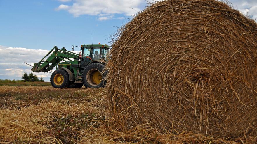 Agricultores extienden paja sobre campos de arándanos de cara al invierno, en Parrsboro, Canadá