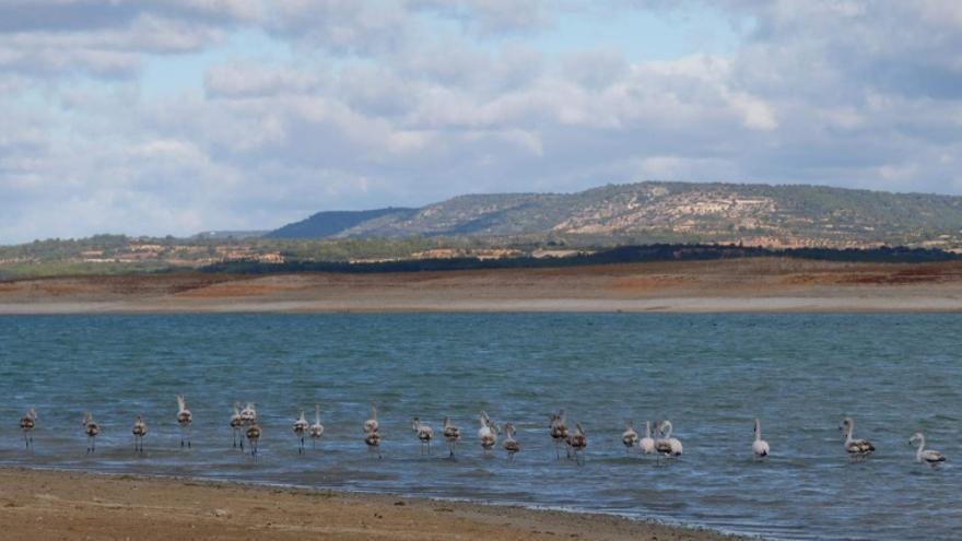 Aves en lo que queda del embalse de Buendía (Cuenca), en la cabecera del Tajo