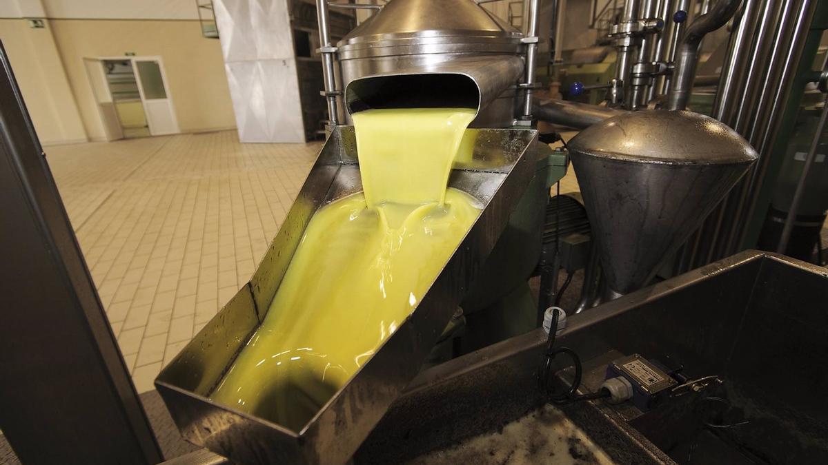 Imagen de archivo del proceso de obtención del aceite en una almazara.