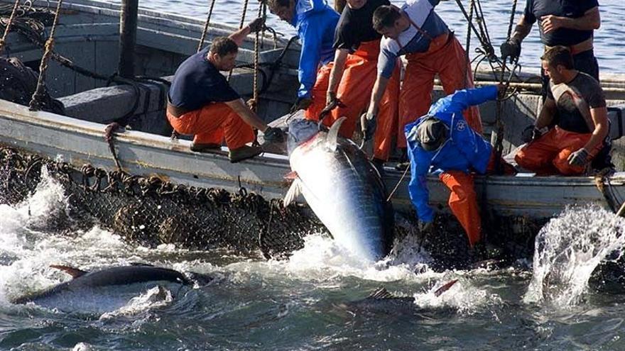 El Gobierno y las comunidades reforzarán los controles en 2018 contra el fraude en el atún