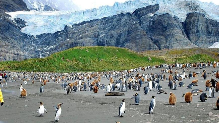 Las islas subantárticas, como Georgia del Sur, que alberga las mayores colonias de pingüinos rey del planeta, son especialmente vulnerables a la crisis climática.