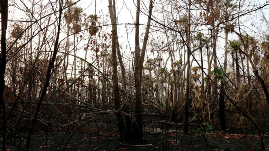 Aspecto del Pantanal paraguayo, en las inmediaciones del centro biológico de Tres Gigantes, afectado por los incendios que han calcinado cerca de 62.000 hectáreas en un zona donde habitan especies protegidas como el yaguareté o el oso hormiguero gigante.