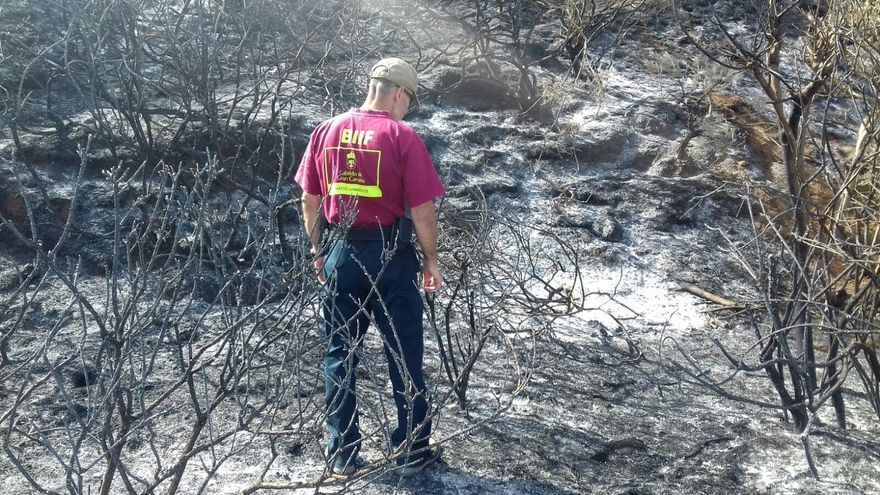 Responsable de Medio Ambiente del Cabildo de Gran Canaria en la zona quemada por el incendio en Cazadores.