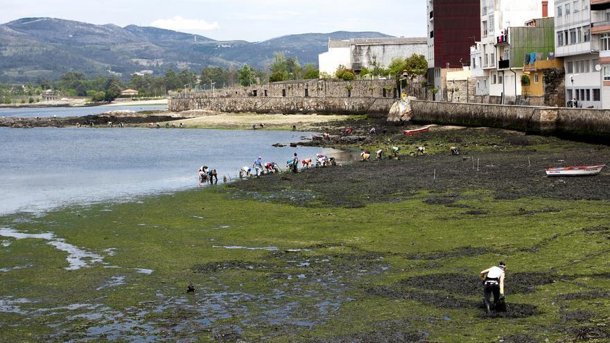 Mariscadores de Rianxo (A Coruña, Galicia)