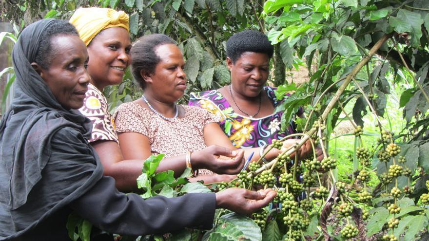 Cuatro productoras del café Tierra Madre, en la plantación de Uganda.