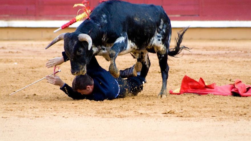 Violencia con el becerro y peligro para el alumno taurino. Foto: AVATMA